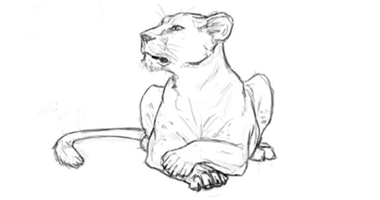 60min Animal Pencil Sketching Art Lesson - Lioness