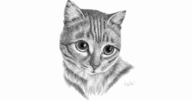 Animal Sketching: Learn to Draw a Cat